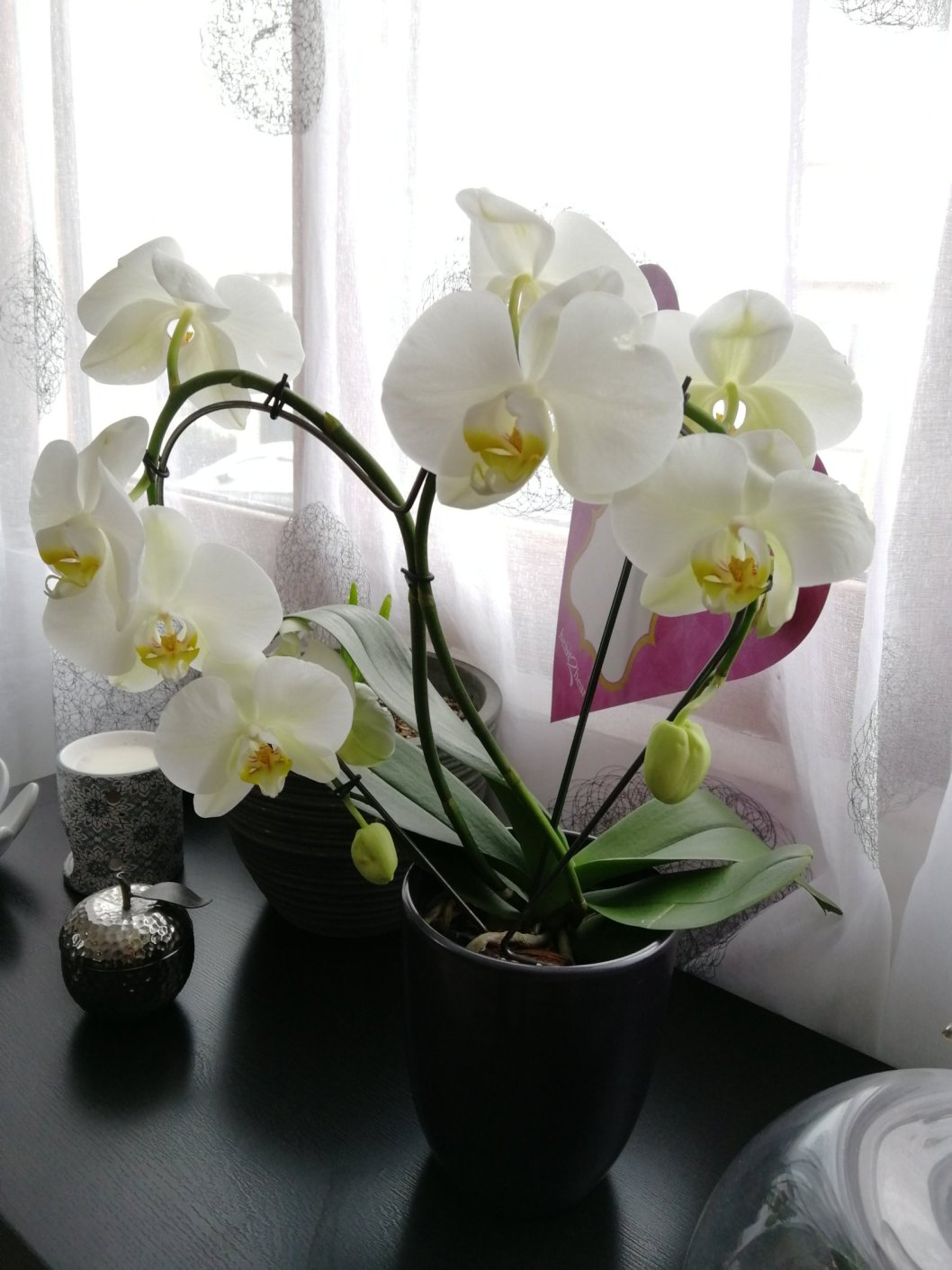 boxbeaute_box_beaute_bio-belle_au_naturel_belleaunaturel_abonnementbox_bonplanbox_fleur_orchidee.jpg