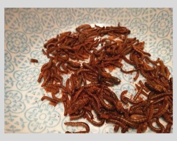test_micronutris_insectes_à_manger (6).jpg
